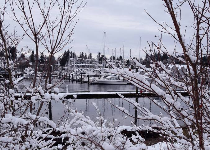 Snow covered trees in the marina with boats in the background