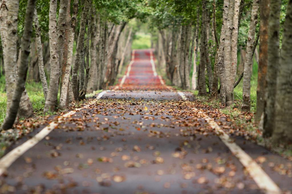 Narrow bumpy empty road lined by trees and covered in fall leaves